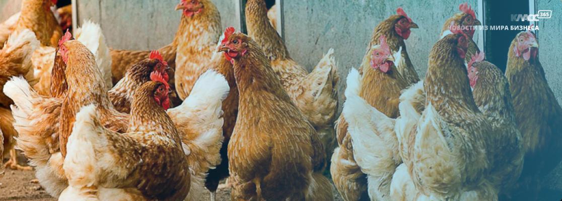 В Совфеде рассматривают идею выделить субсидии производителям органических продуктов