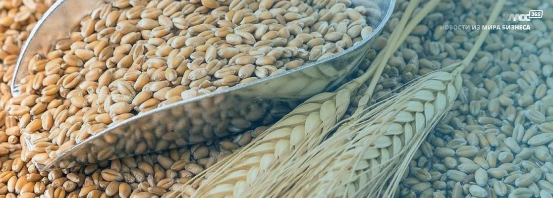 Квоты на экспорт зерна могут вернуться – Госдума поддерживает